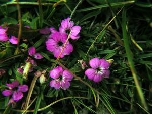 Резервати в Национален парк Пирин